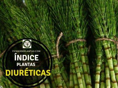 Lista de Plantas Diurética.