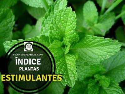 Lista de Plantas Estimulantes