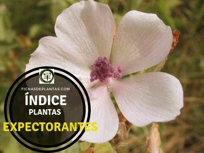 Lista de Plantas Expectorantes.