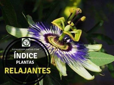 Lista de Plantas Relajantes