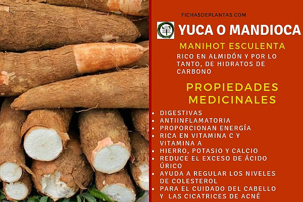 Yuca Propiedades Medicinales