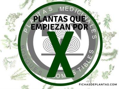 Plantas que empiezan con X