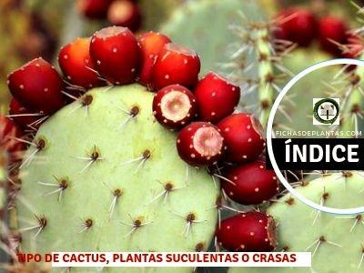 Cactus, Tipos de Plantas