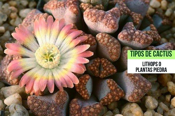 Flores Cactus Piedras