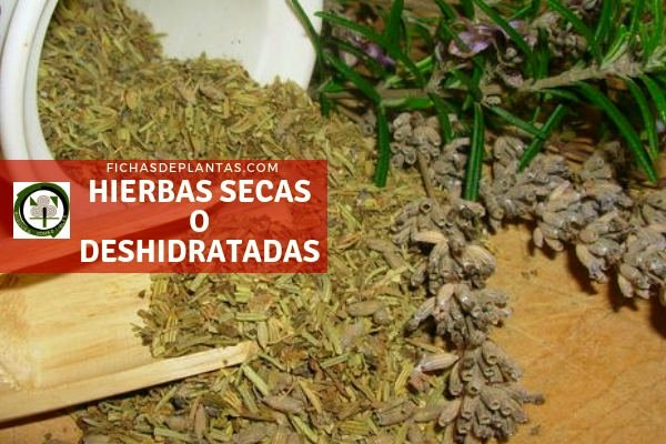 Hierbas secas o Deshidratadas