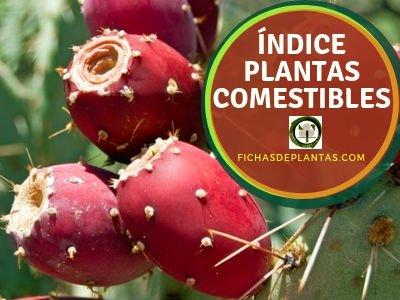 Plantas Comestibles, Indice de Especies
