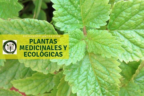 Plantas Medicinales y Ecológicas