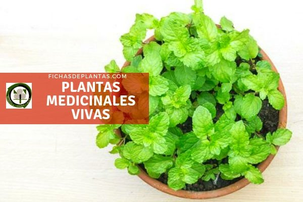 Plantas Medicinales Vivas