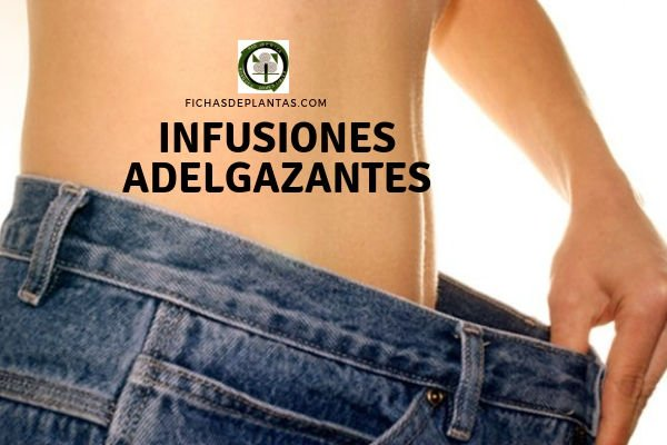 Infusiones Adelgazantes