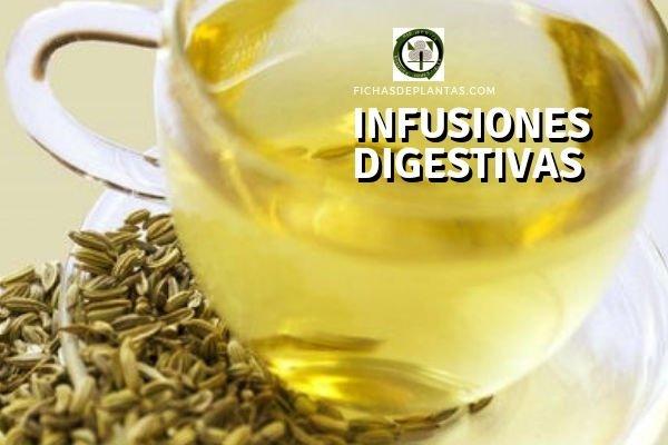 Infusiones Digestivas