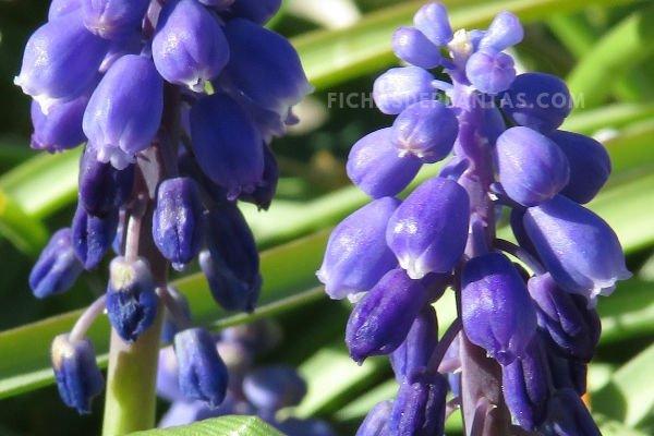 Fotos Nazarenos flores
