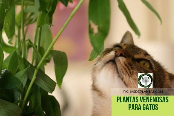 Gatos, Plantas Venenosas