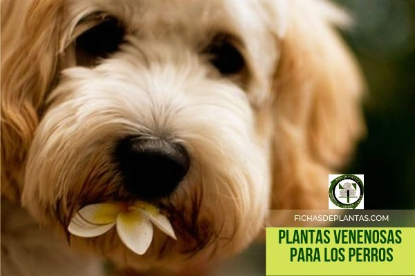 Perros, Plantas Venenosas