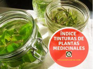 Tinturas de Plantas Medicinales