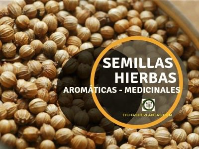 Comprar Semillas Hierbas Aromáticas Medicinales 🍃