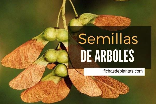 Semillas de Arboles
