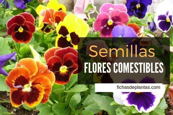 Semillas Flores Comestibles