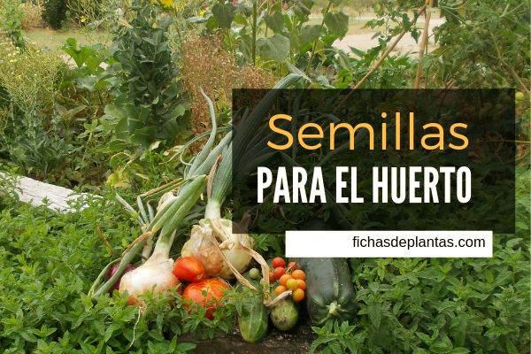 Semillas para el Huerto, Verduras y Hortalizas