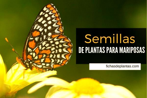 Para Mariposas, Semillas de Plantas