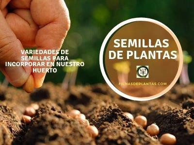 Semillas de Plantas, Variedades