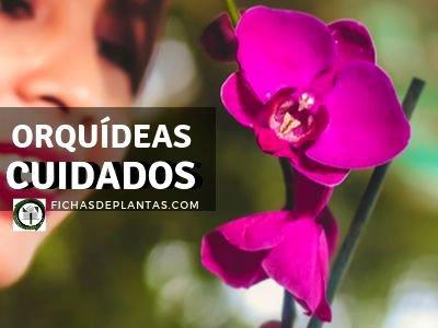 Orquídeas, Cuidados