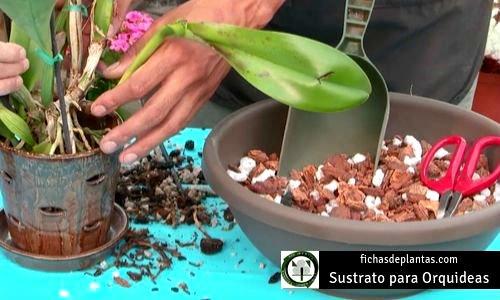 Orquídeas Sustrato
