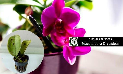 Orquídeas Macetas