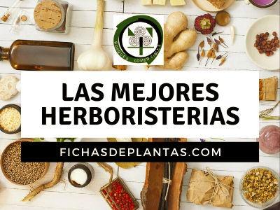 herboristerias en España