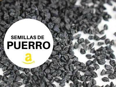 semillas de Puerro