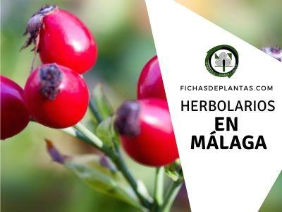 Herbolario Málaga Fichas De Plantas