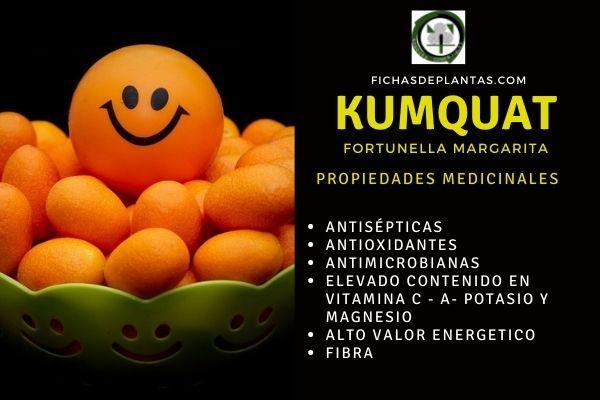 Propiedades del kumquat